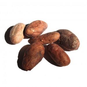 Site-kakaobönor
